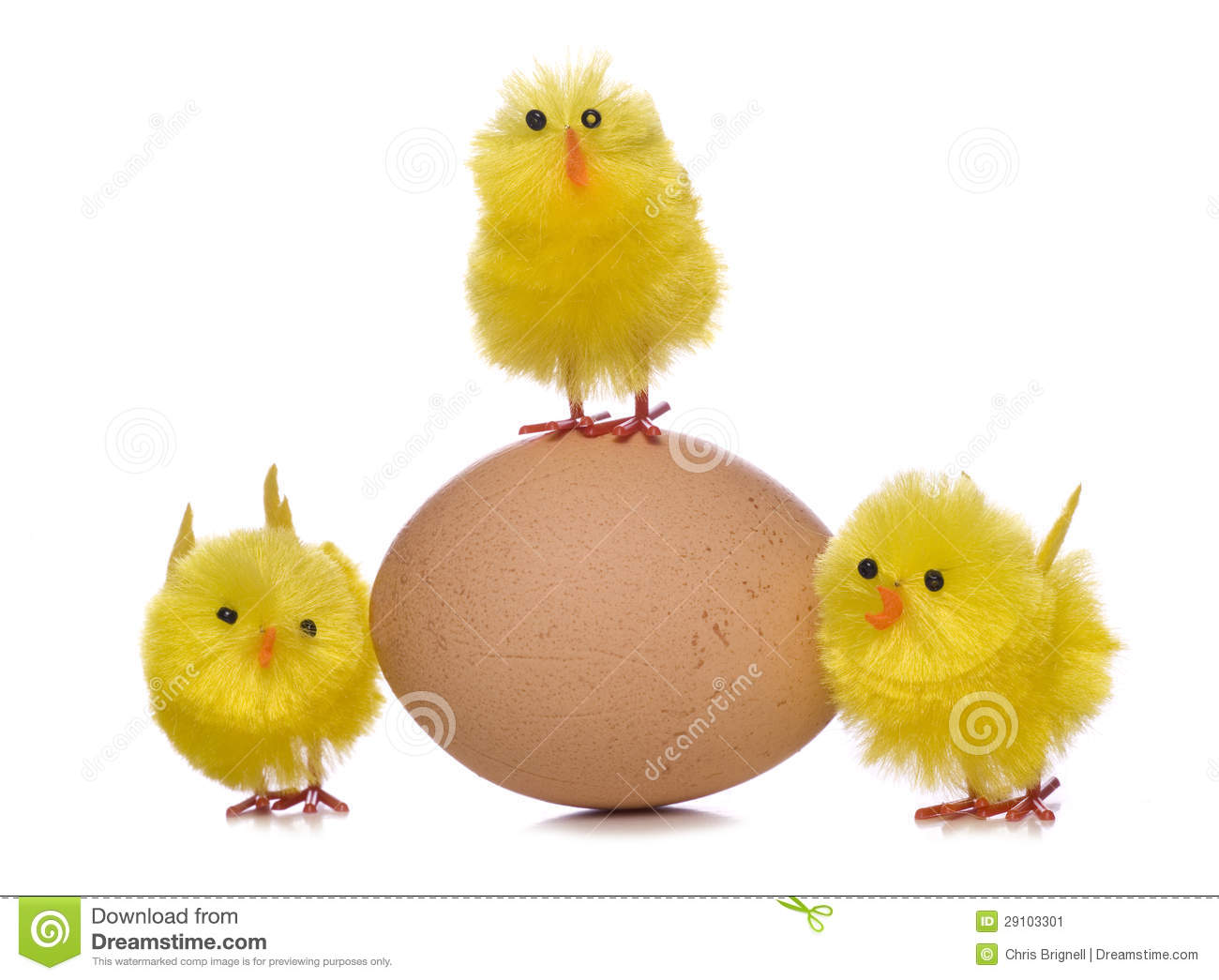 how to grow a chick from an egg