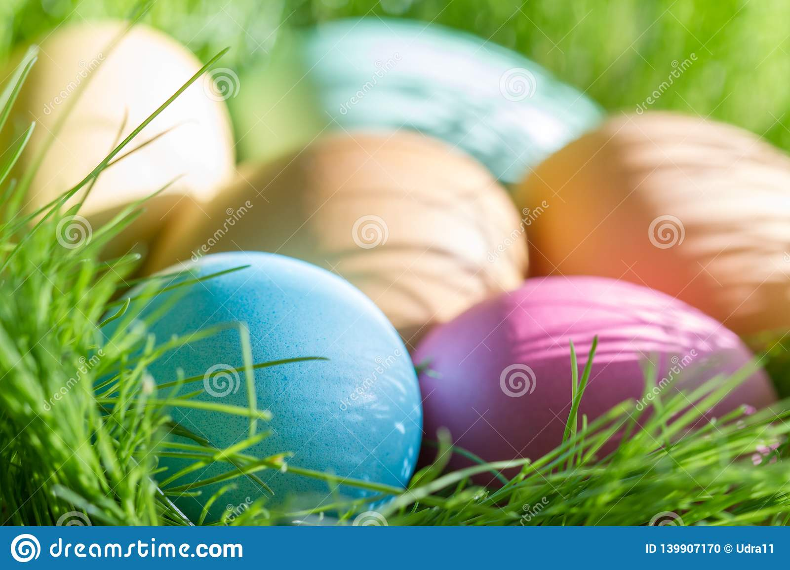 Easter colorful eggs in spring green grass in sunlight floral abstract background