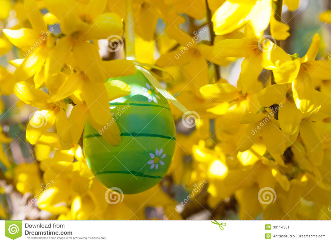 Easter egg hanging on a branch with yellow flowers stock image download easter egg hanging on a branch with yellow flowers stock image image of forsythia mightylinksfo