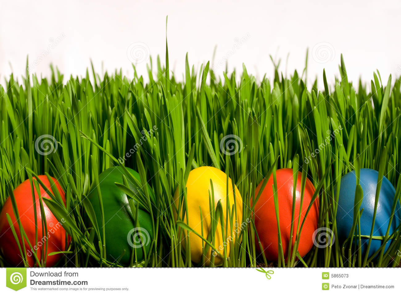 Easter Eggs In Grass Stock Photos Image 5865073