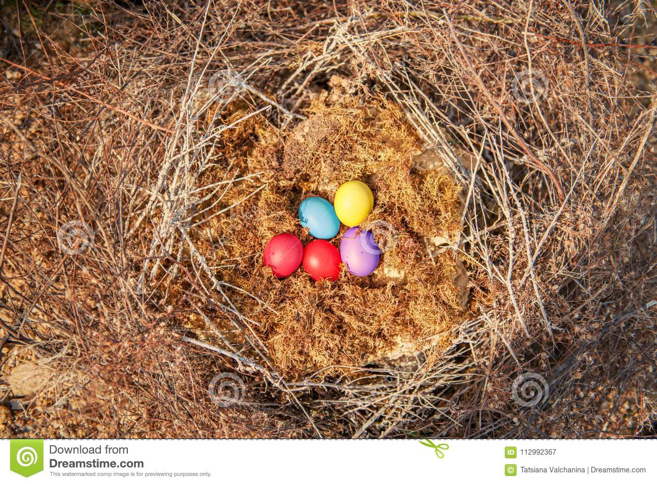 Easter eggs in a nest of straw branches lie on a moss