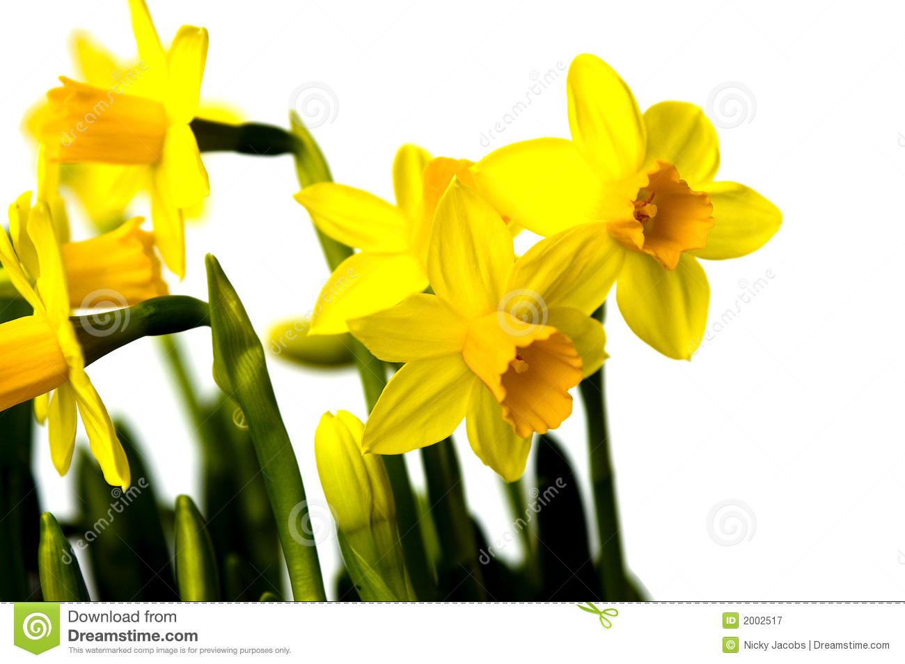 Easter Flowers Lily Daffodil Stock Image Image Of Lily Nature