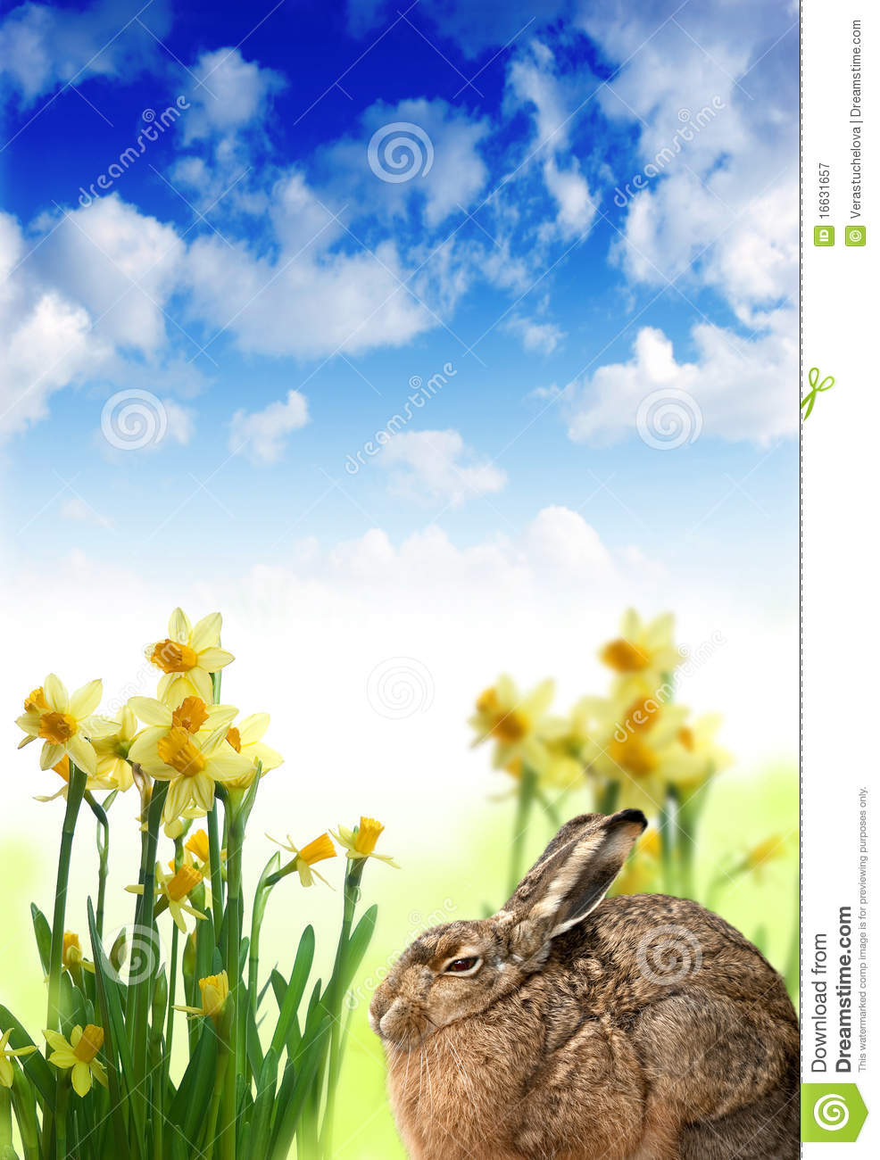 Download Easter hare and daffodils stock image. Image of common - 16631657