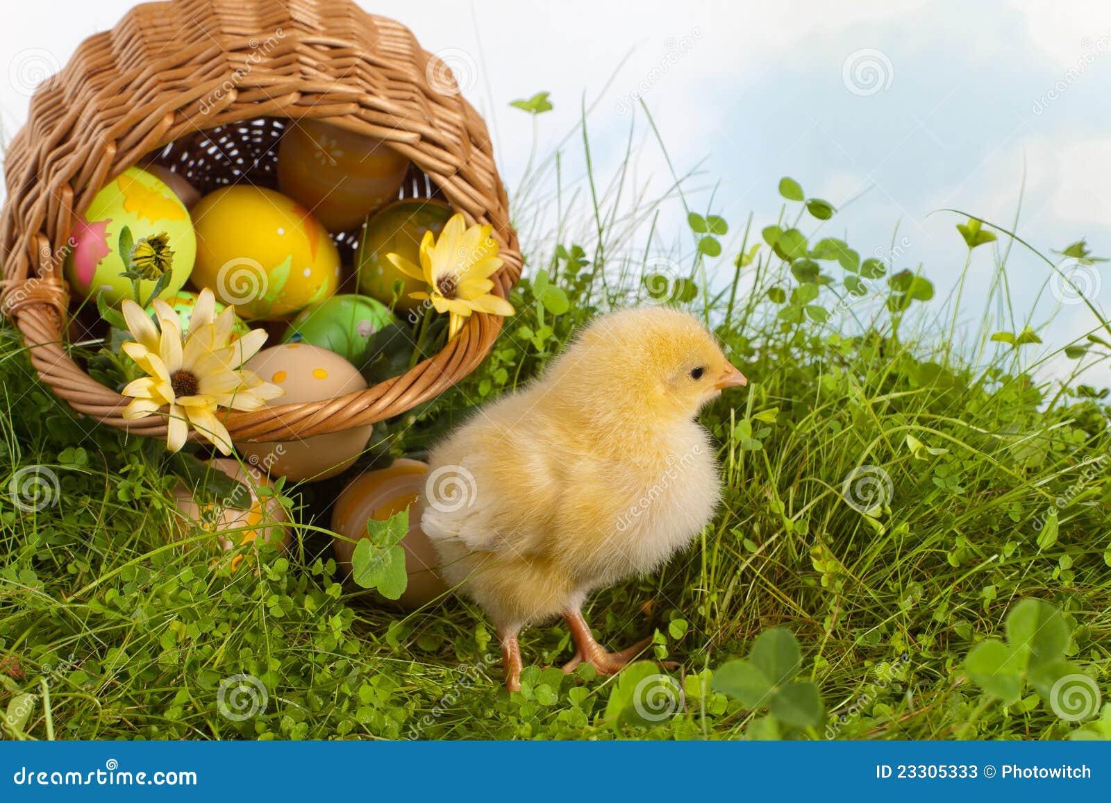 Easter koszykowy pisklęcy kolor żółty
