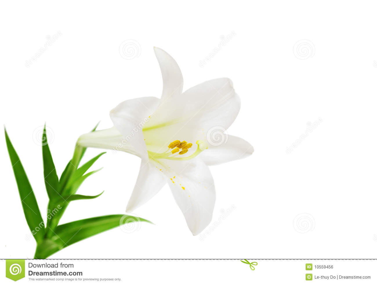 easter lilies free clipart - photo #45