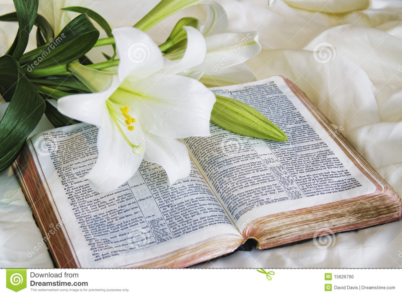 Lily Laying On A Antique Bible On Easter Morning Stock Photo - Image ...