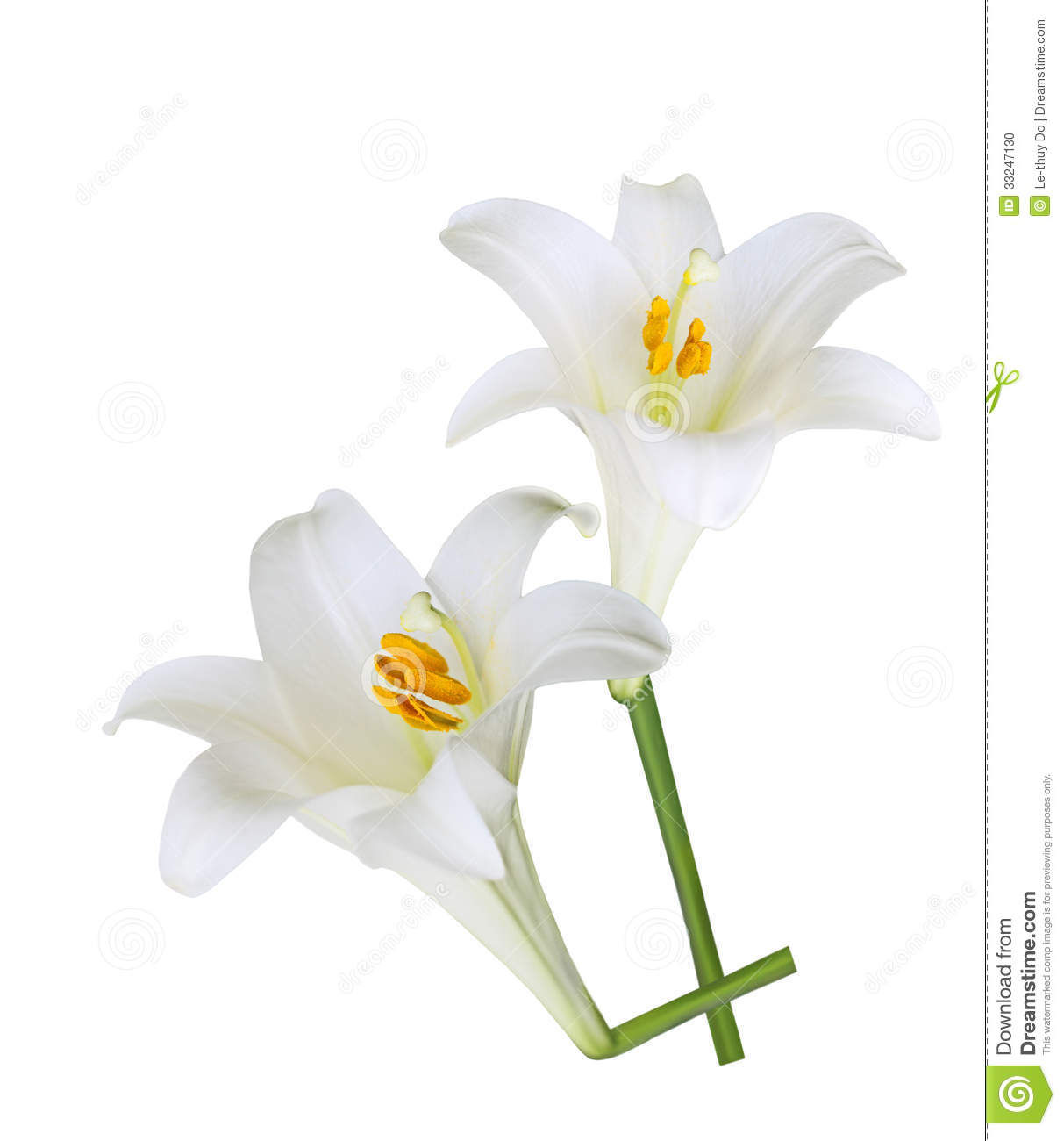 Waiting for Lily Bloom Easter Lilies  Kindle edition by