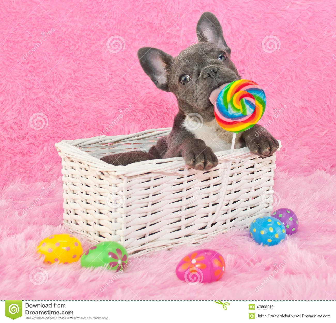 Easter Puppy Stock Image. Image Of Licking, Puppy
