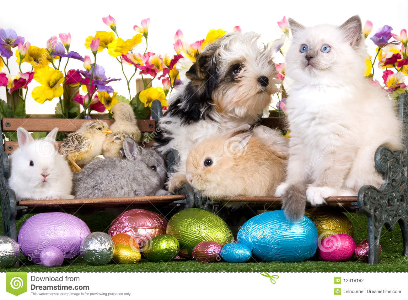 Easter Puppy Kitten Bunnies And Chicks Stock Photo Image Of Pets