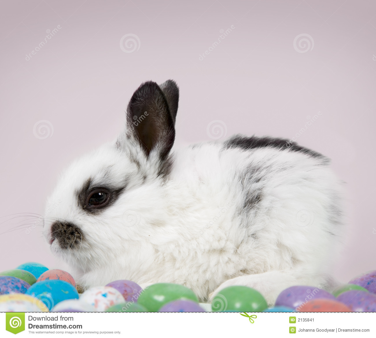 Download Easter Scene stock image. Image of bunnies, chocolate - 2135841