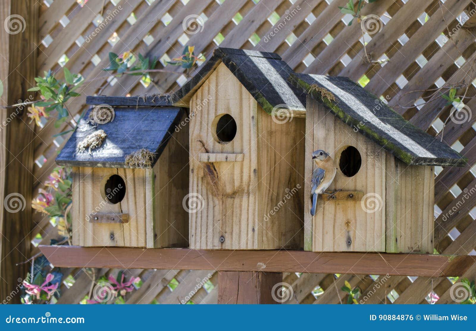 Eastern Bluebird Bird Nest Box Garden Arbor Birdhouses Stock Photo ...