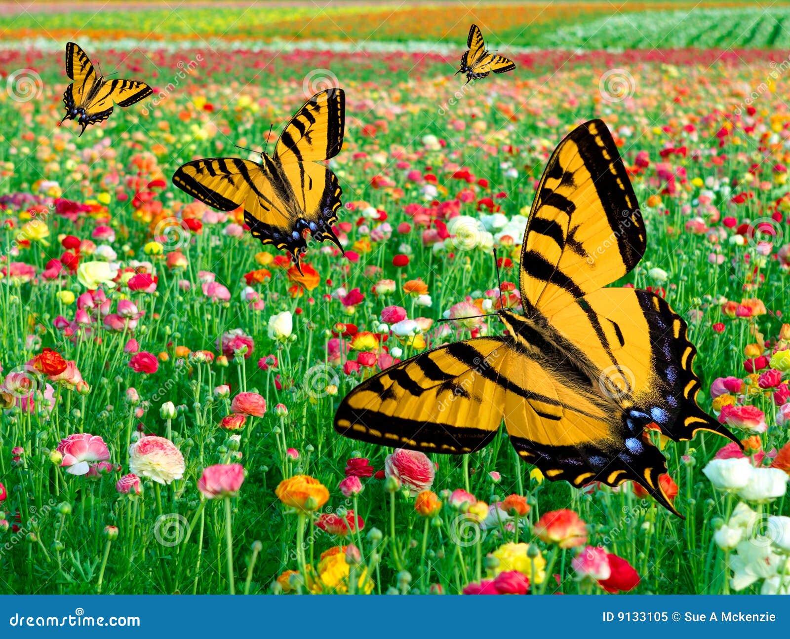 eastern tiger swallowtail butterfly flower field royalty