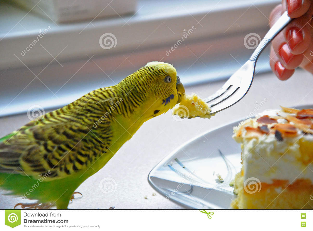 Eating parrot