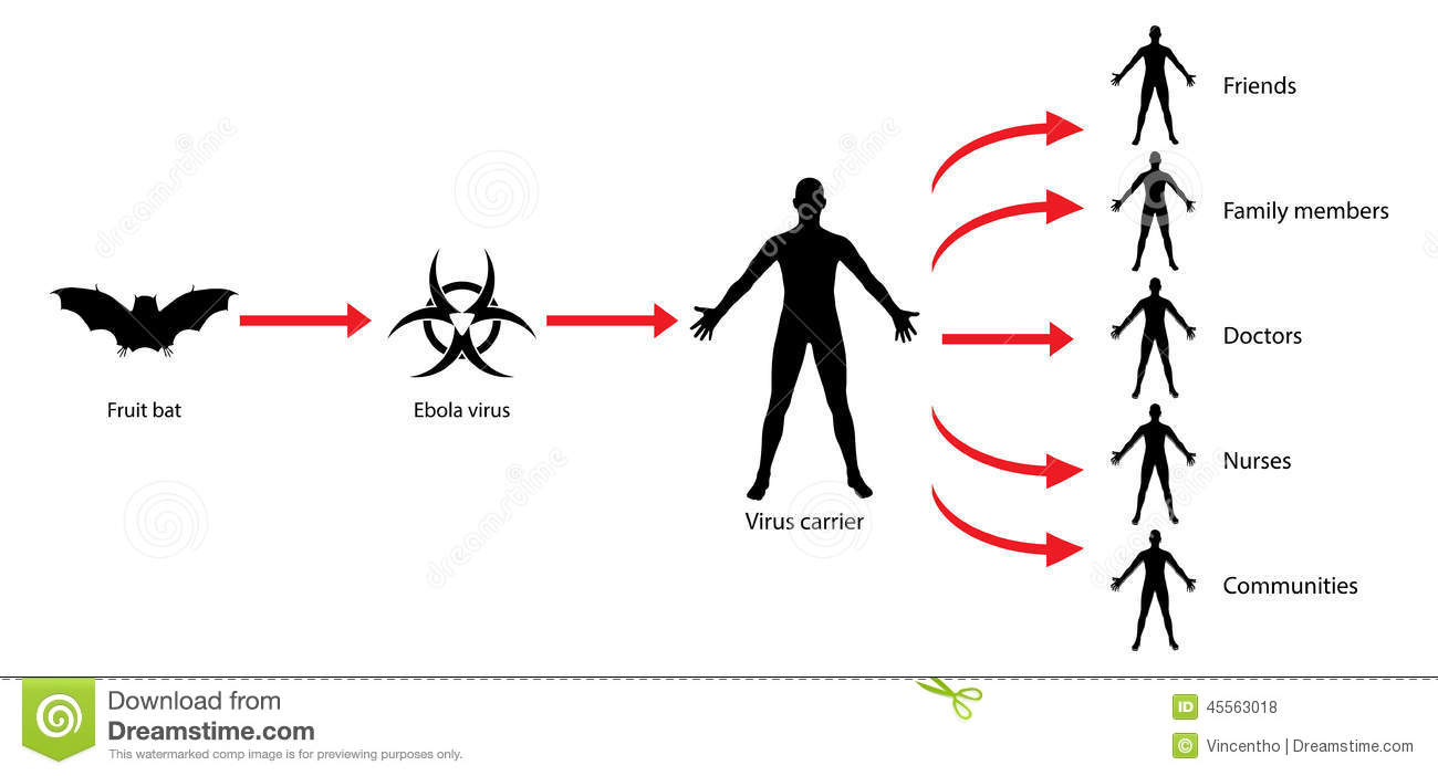 Ebola Transmission Virus Spread Diagram Illustration Stock