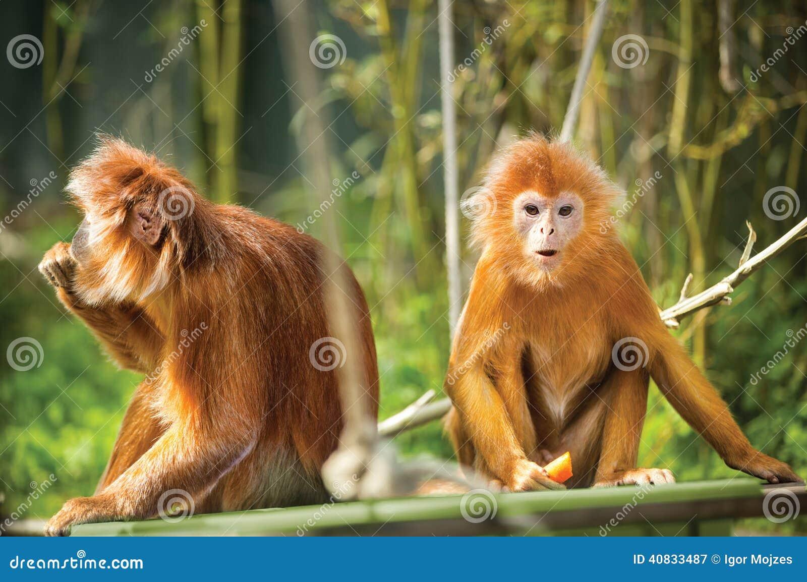 Фото с неграми обезьянами 14 фотография