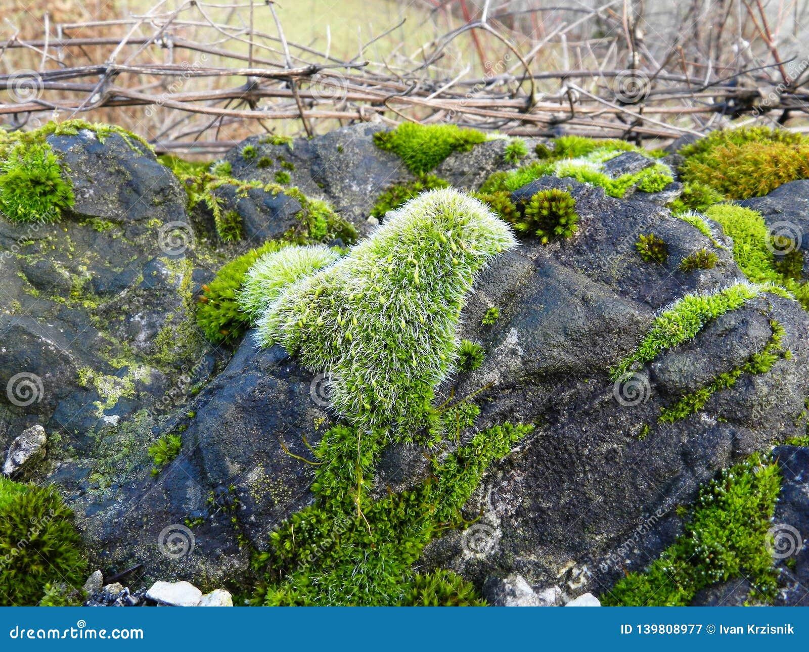 EbreljeСловения Å нашло каннелюры неандерталца