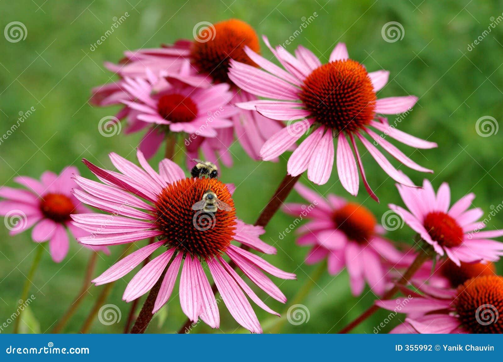 Комнатные растения: фото с названиями. Фотографии 57