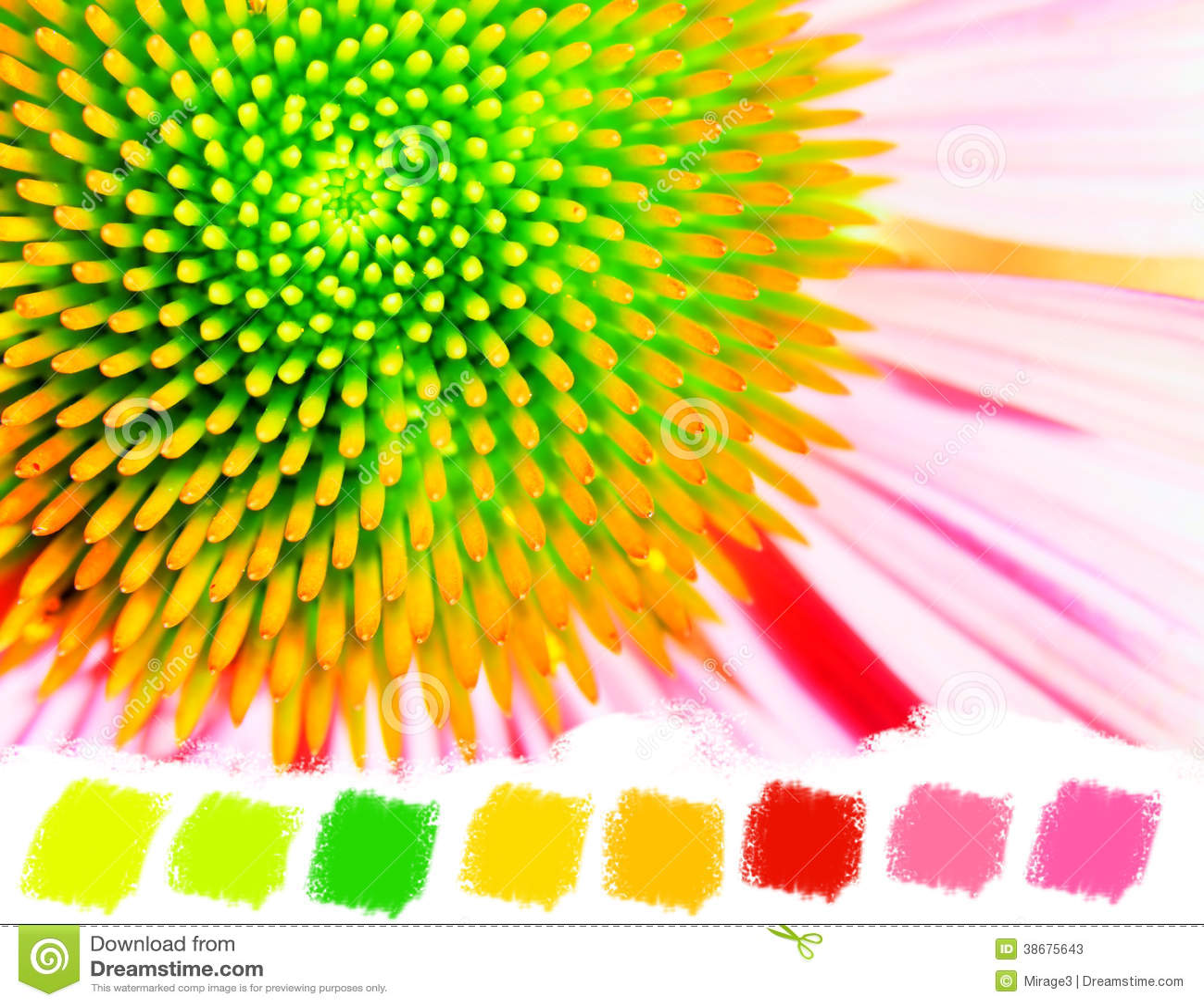 echinacea de nen o paleta de colores prpura del coneflower fotos de archivo