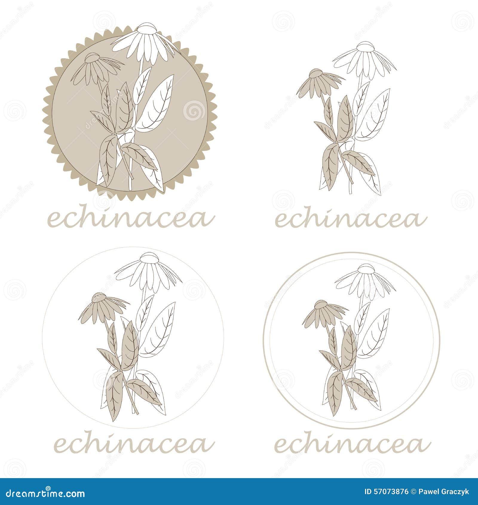 Echinaceaetiketten
