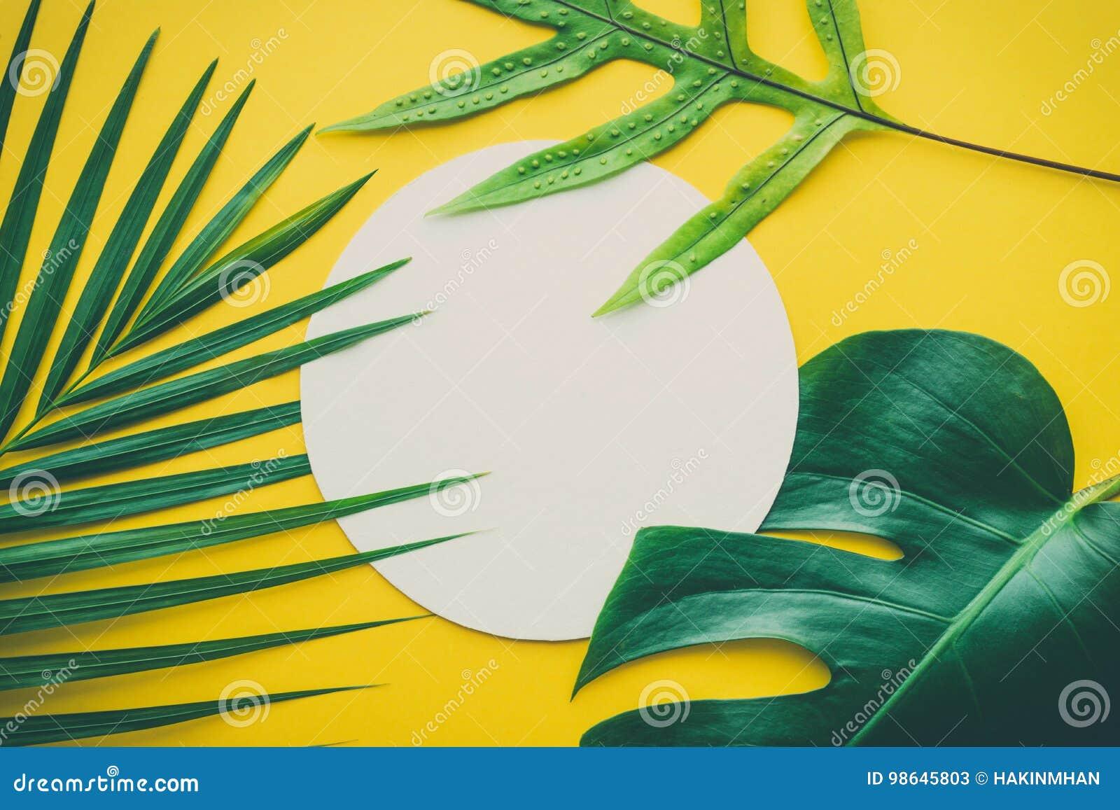 Echte bladeren met witte exemplaar ruimteachtergrond Tropische Botanisch