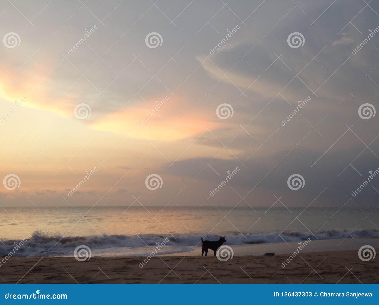 Echte zonsondergang van Sri Lanka