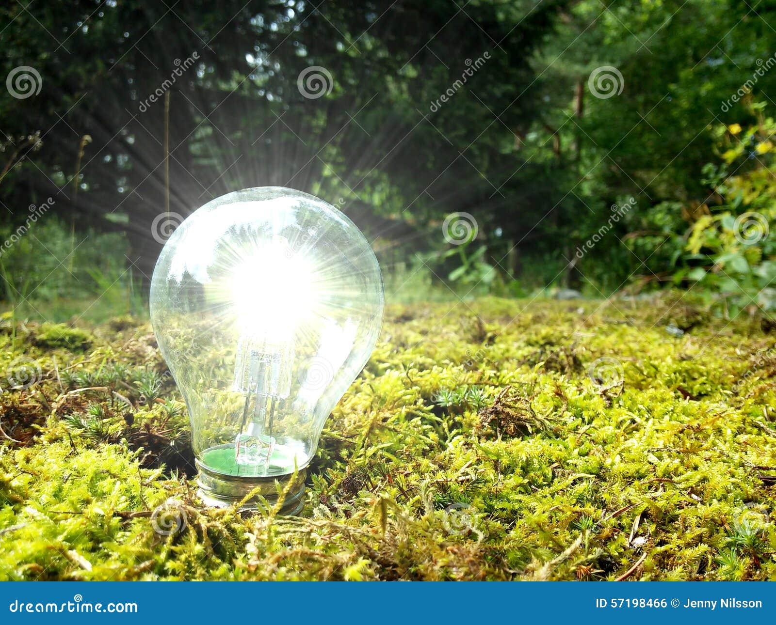 Eco森林光