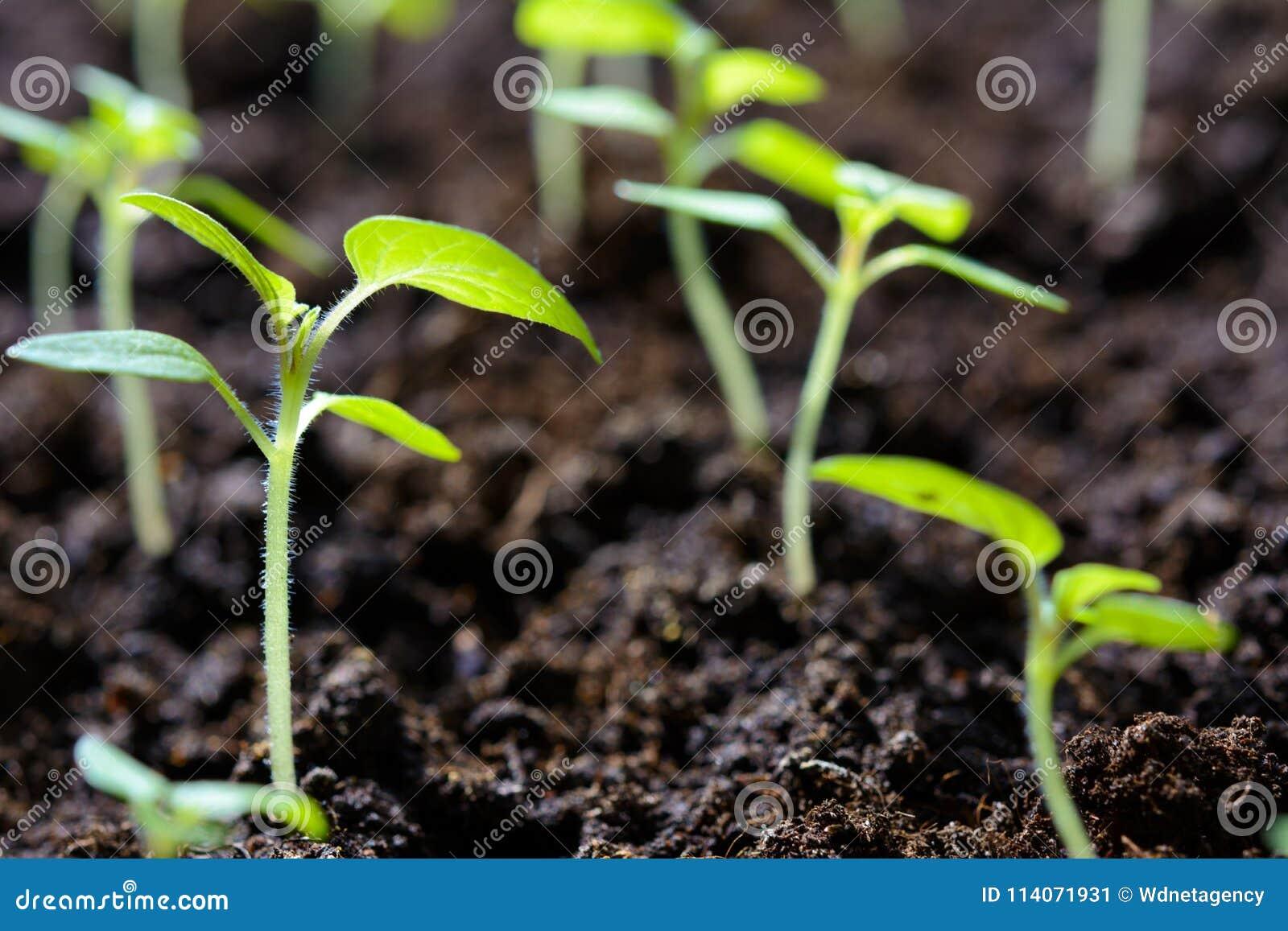 Seedlings of young plants