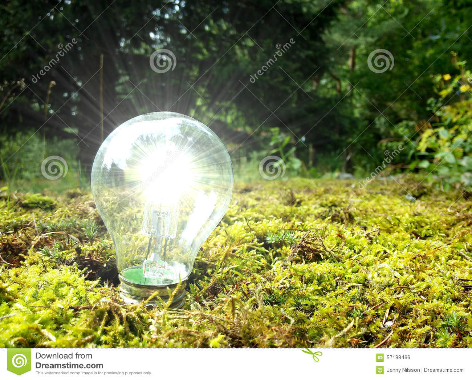 Eco lasu światło