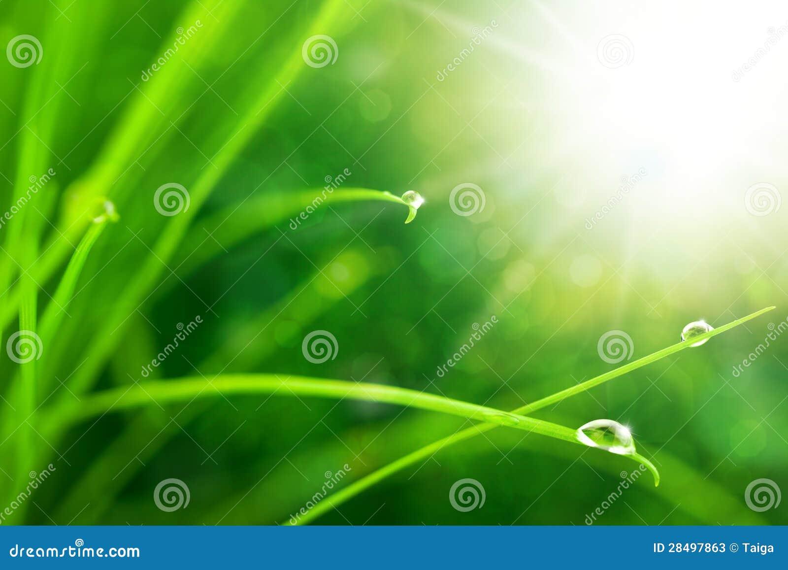 Eco Natur-Hintergrund mit Gras, Sun und Waterdrops