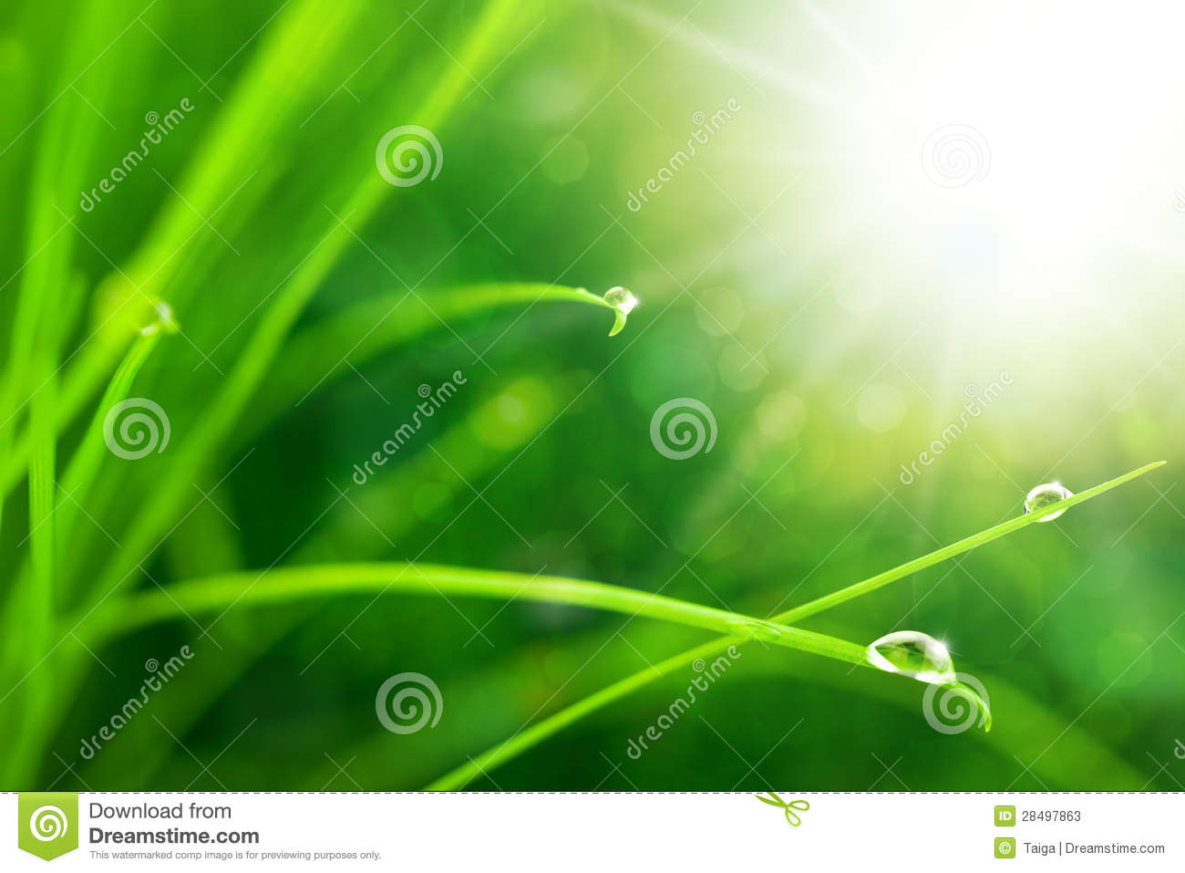 Eco Nature Background with Grass, Sun and Waterdrops