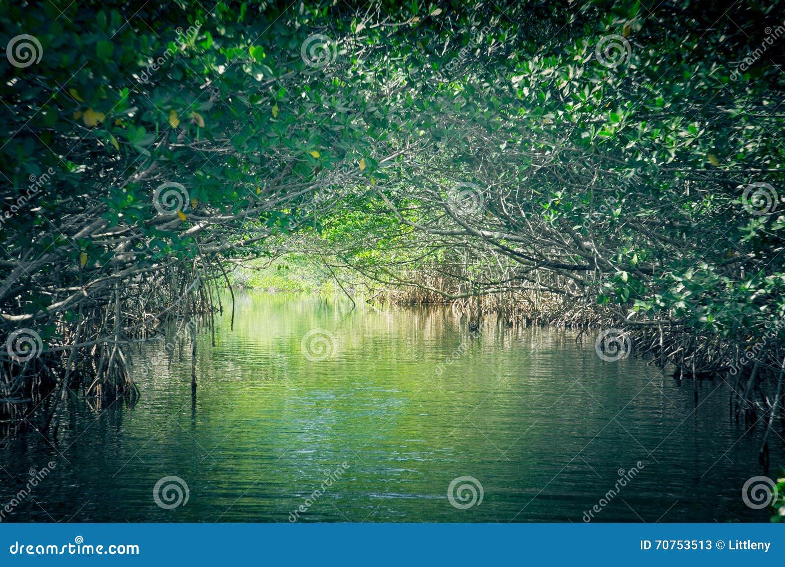 Eco-Tourism mangroves everglades
