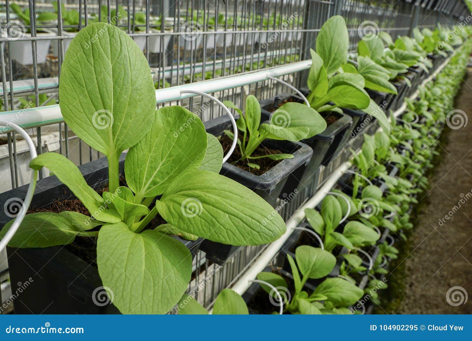Eco vegetable in vase.