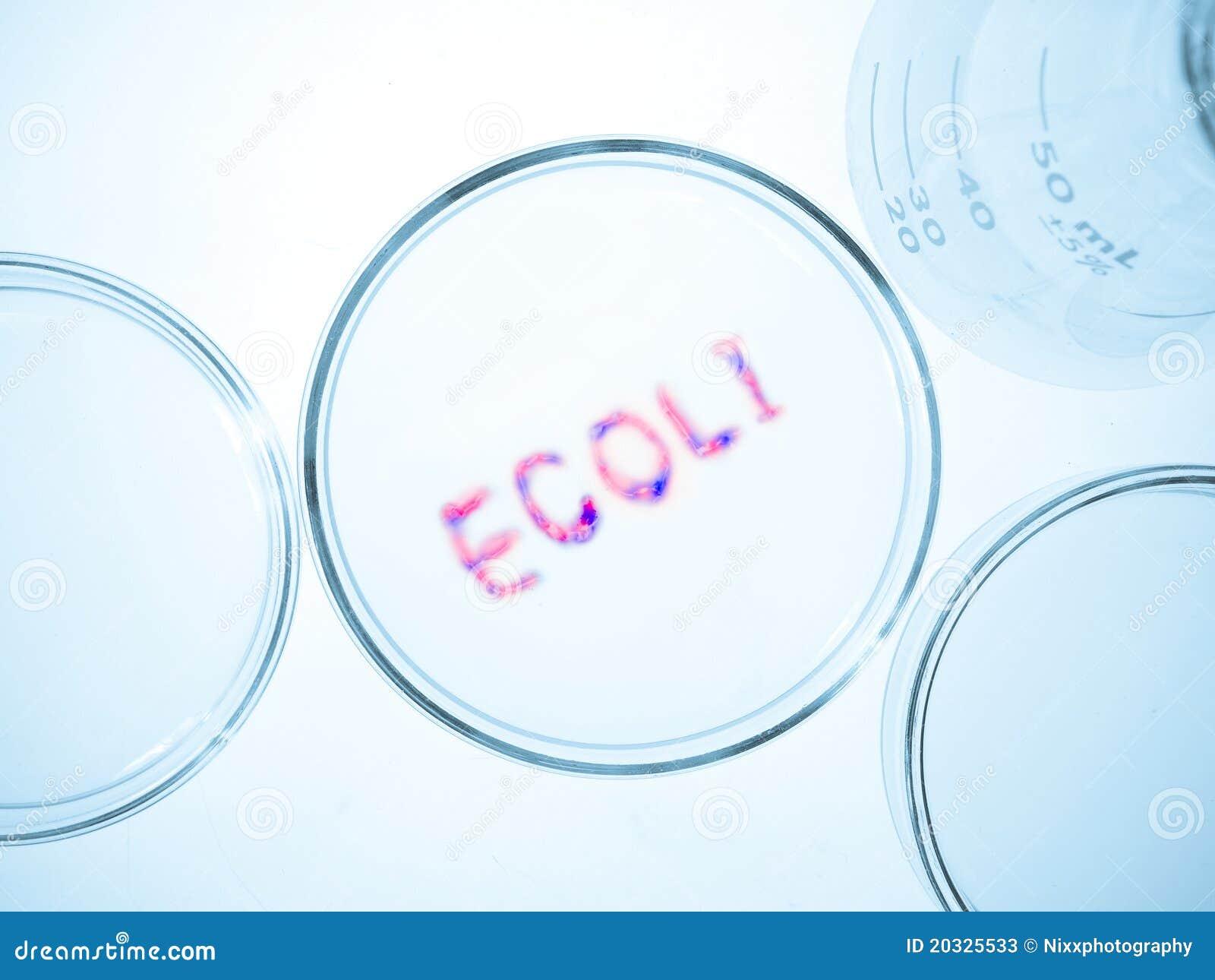how to make glycerol ecoli stock
