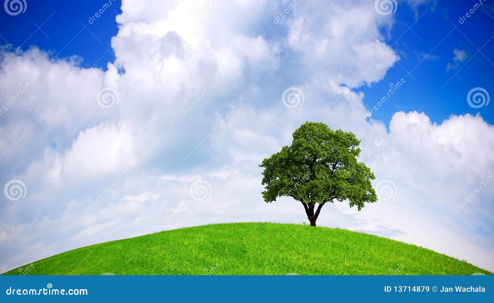 Ecología global