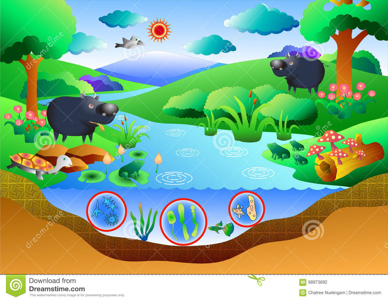 Ecosystem diagram stock vector illustration of ground 88973692 ecosystem diagram pooptronica Image collections