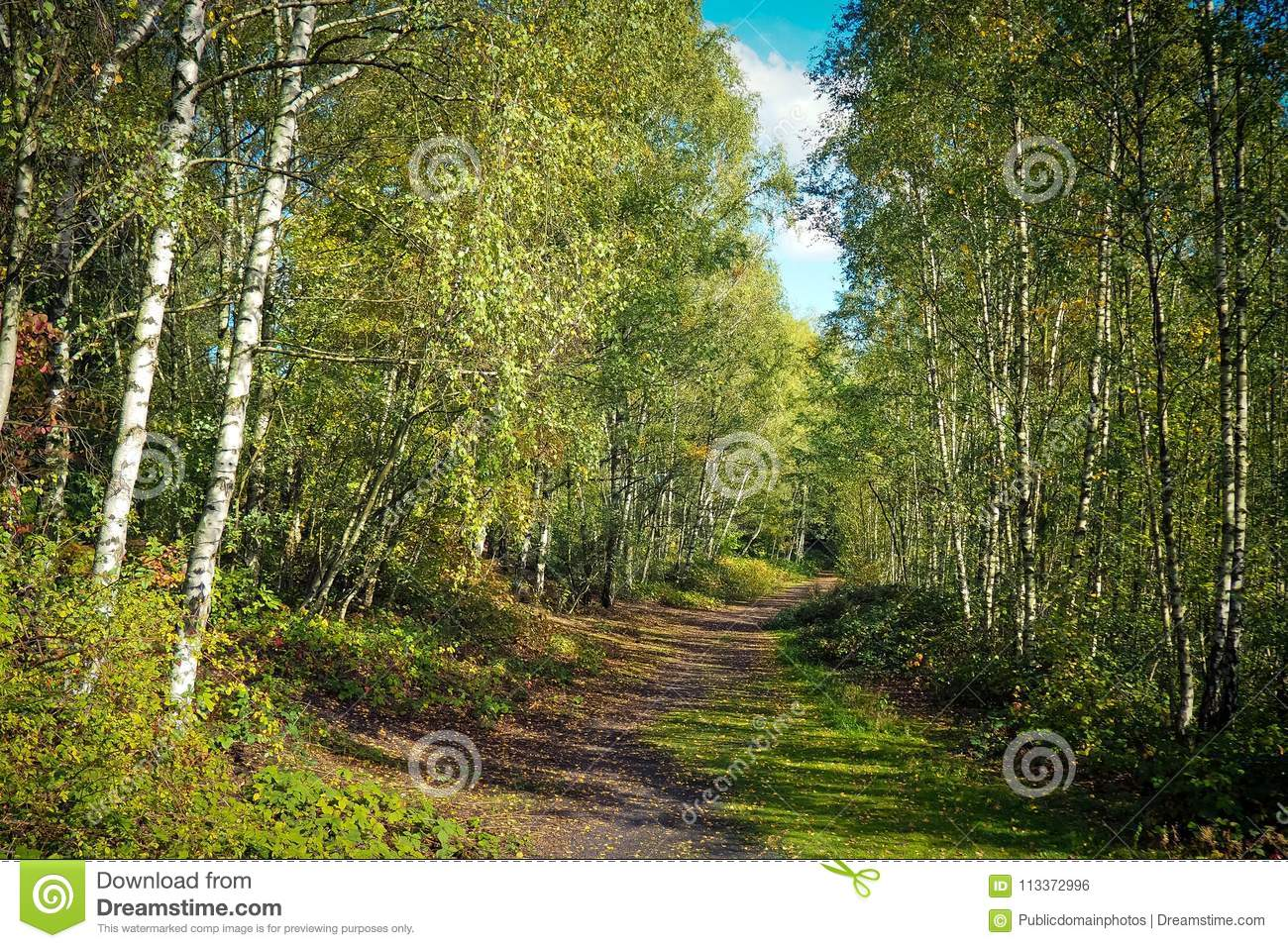 Ecosystem, Nature, Temperate Broadleaf And Mixed Forest