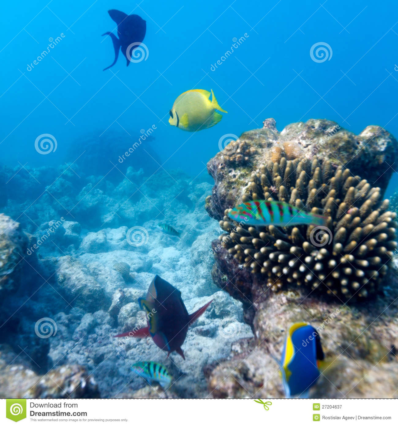 colorful coral reefs wallpaper