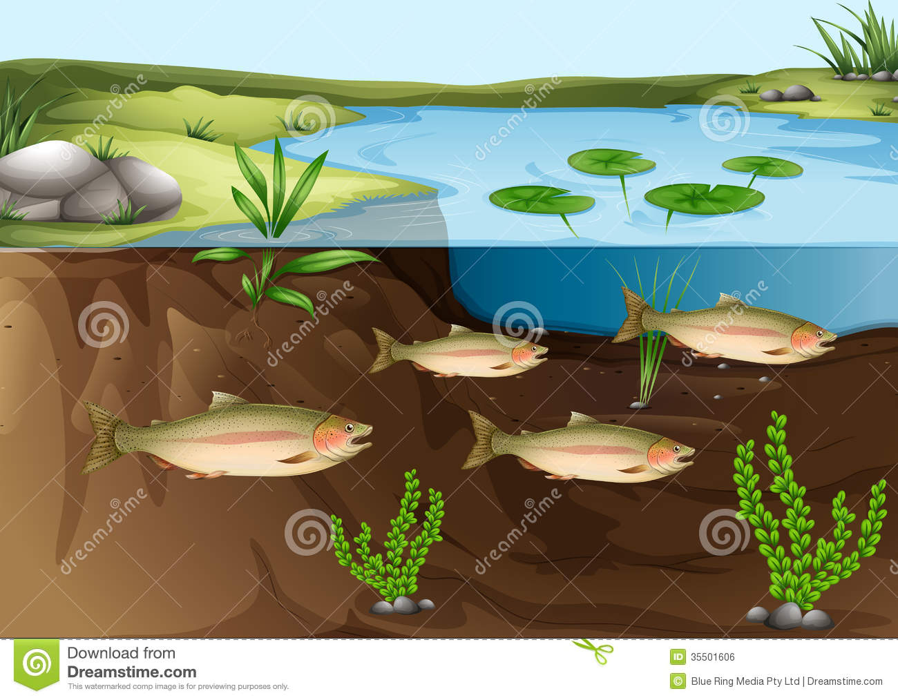 An ecosystem under the pond