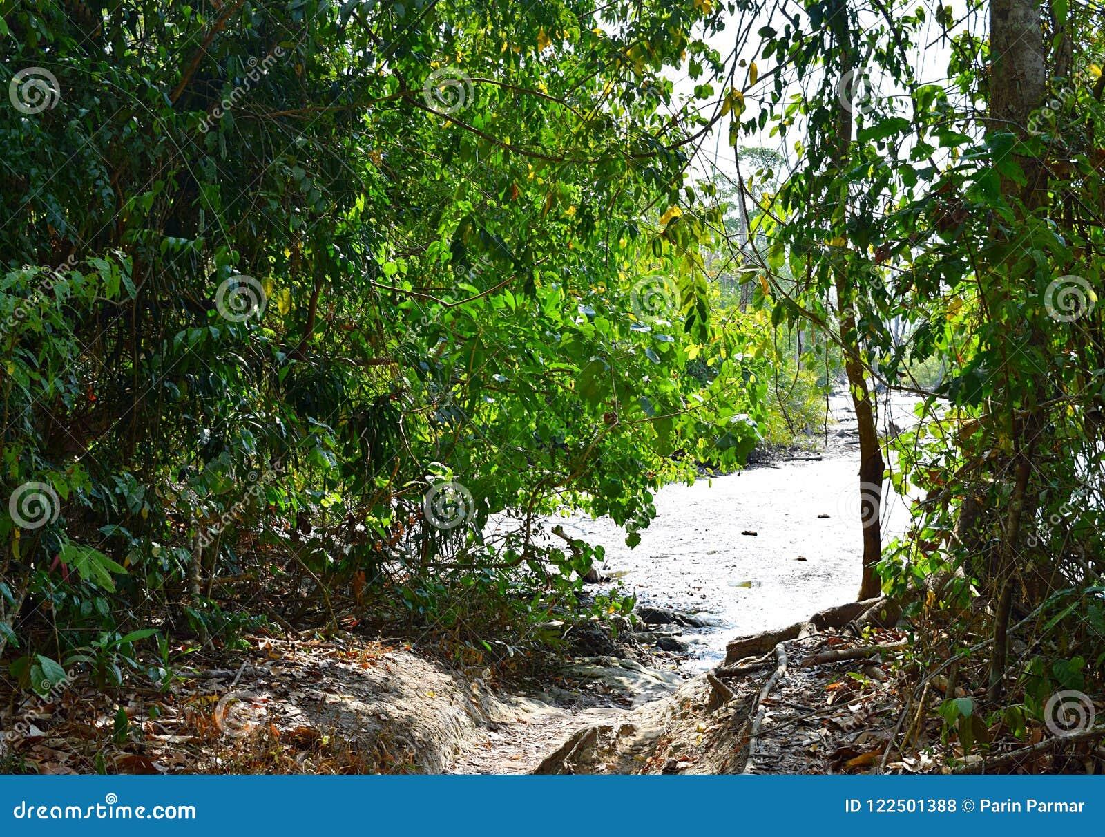 Ecoturismo - passeio na montanha através da floresta tropical tropical sempre-verde - praia do elefante, ilha de Havelock, ilhas
