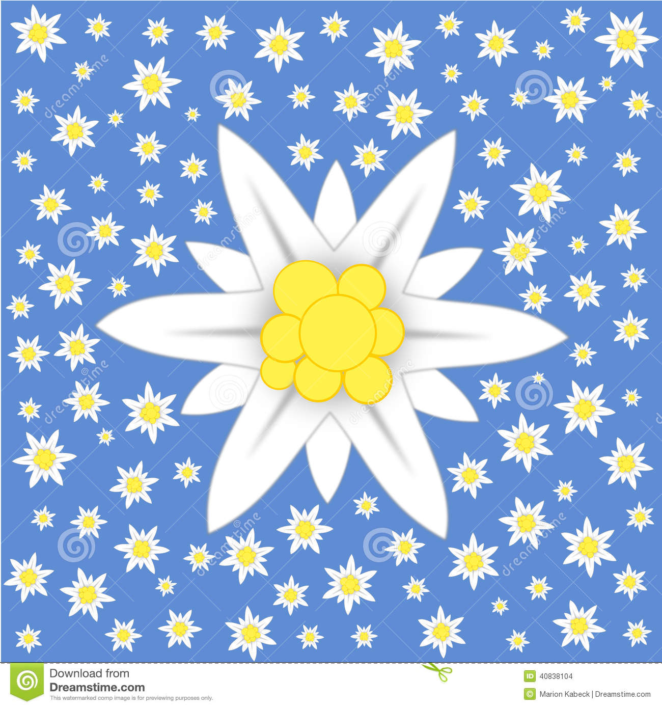 Edelweiss On Blue Background Stock Illustration