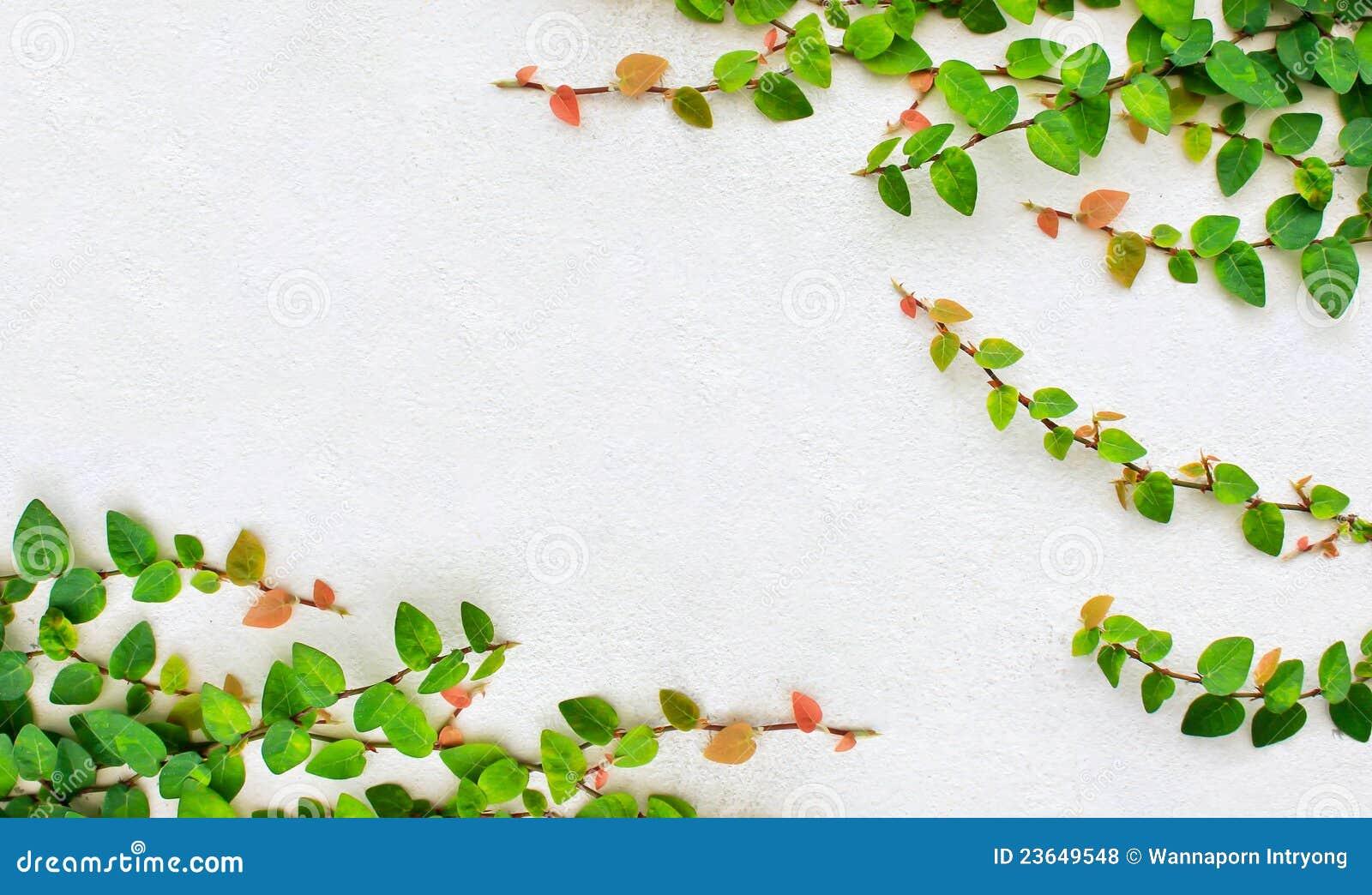 Edera rampicante fotografia stock immagine di brown for Edera rampicante