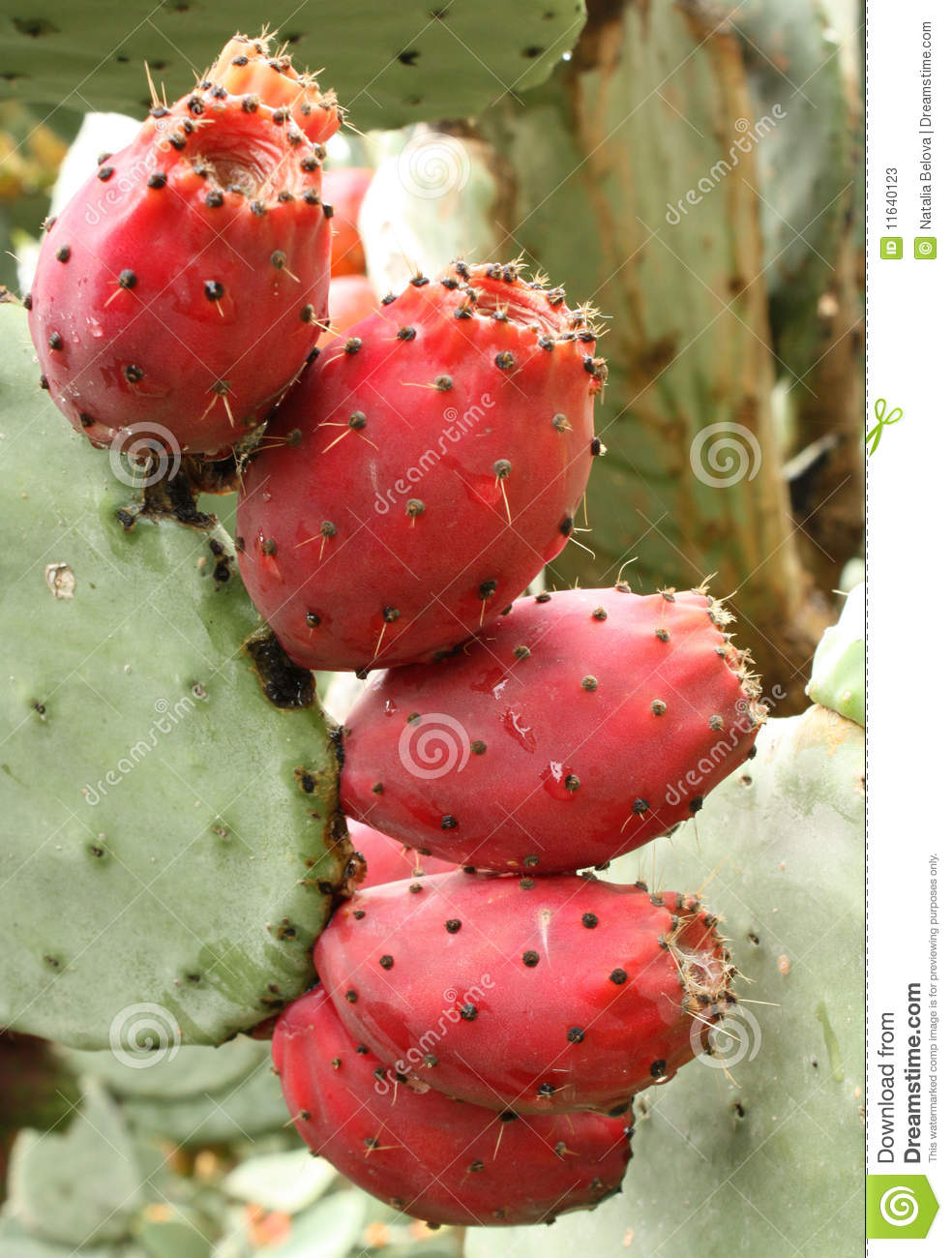 how to cook cactus fruit