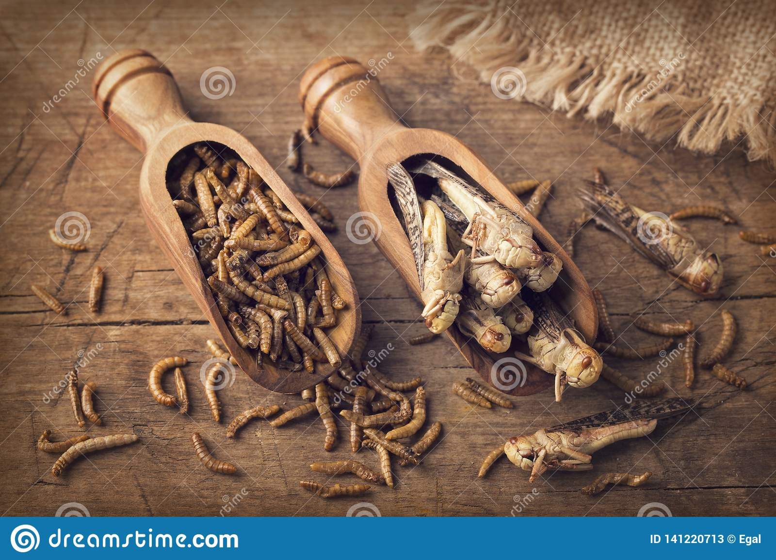 Edible mealworms and grasshoppers