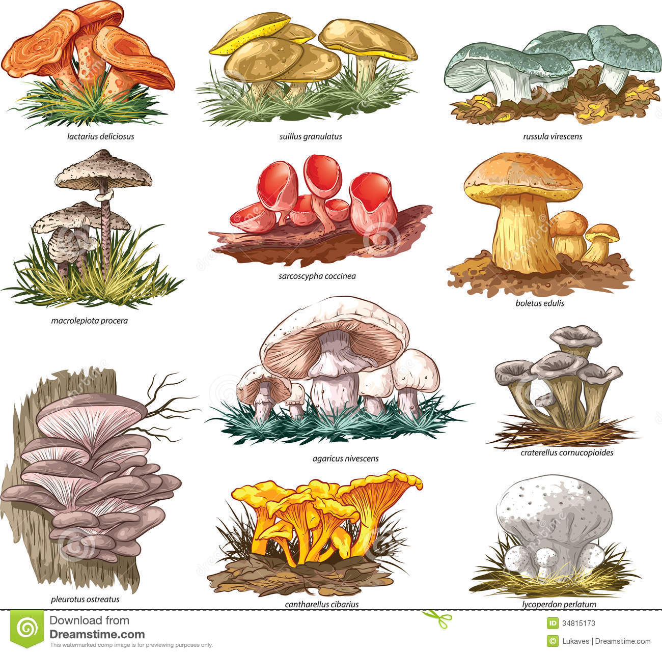 Edible Mushrooms Stock Photos - Image: 34815173
