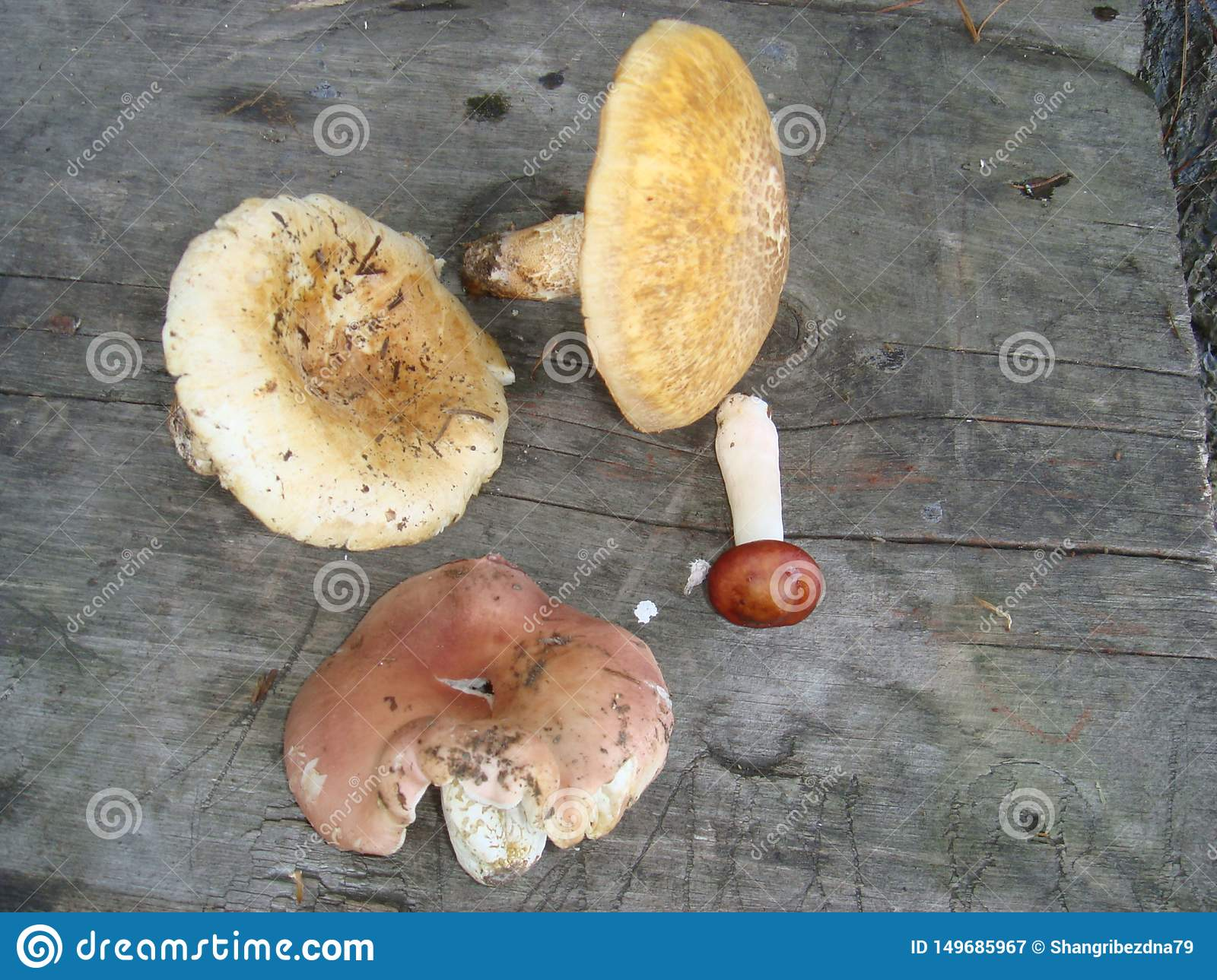 Fine Edible Mushrooms On A Wooden Bench Stock Image Image Of Caraccident5 Cool Chair Designs And Ideas Caraccident5Info