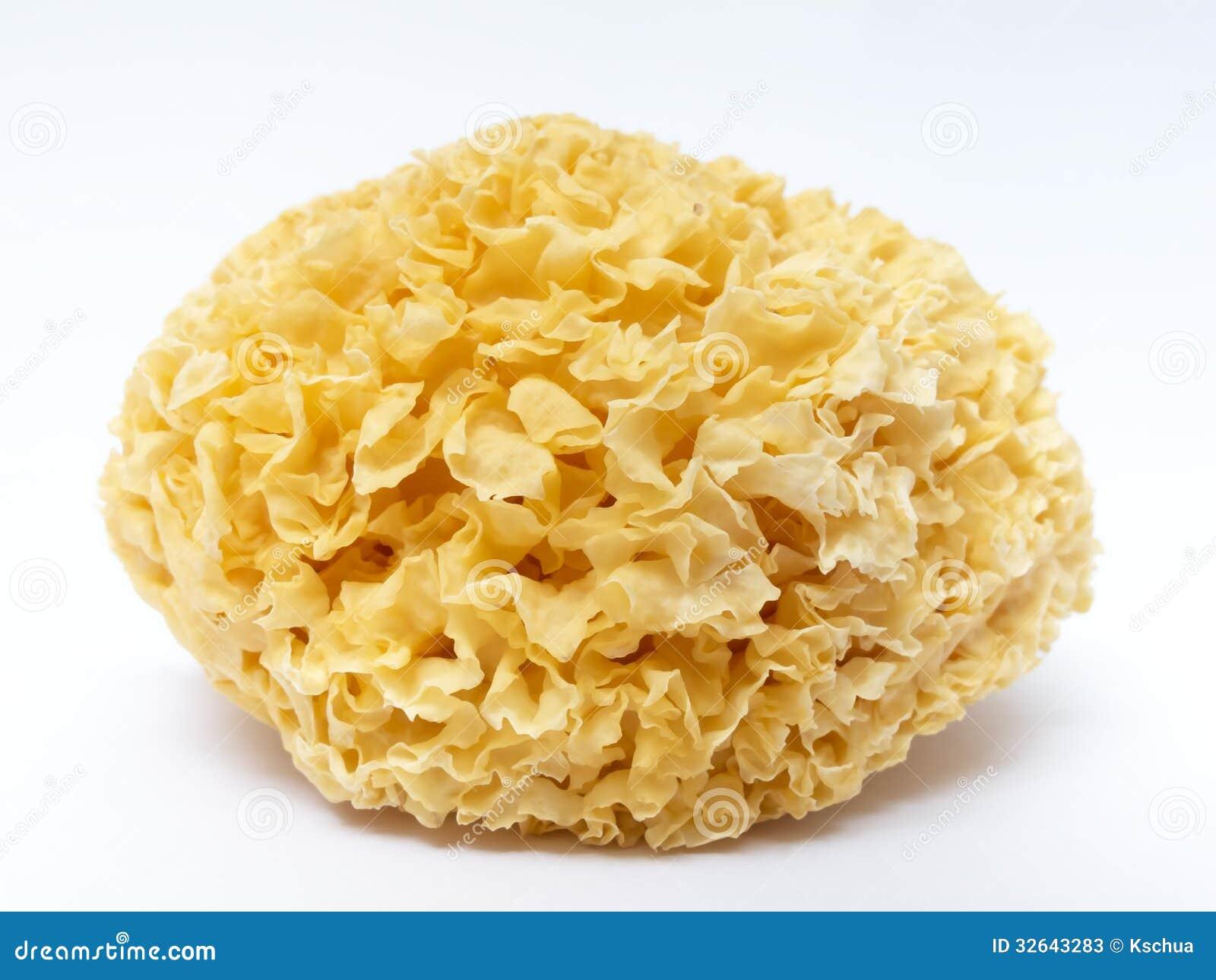 Edible white fungus stock image image of herb gourmet for Ayurvedic healing cuisine