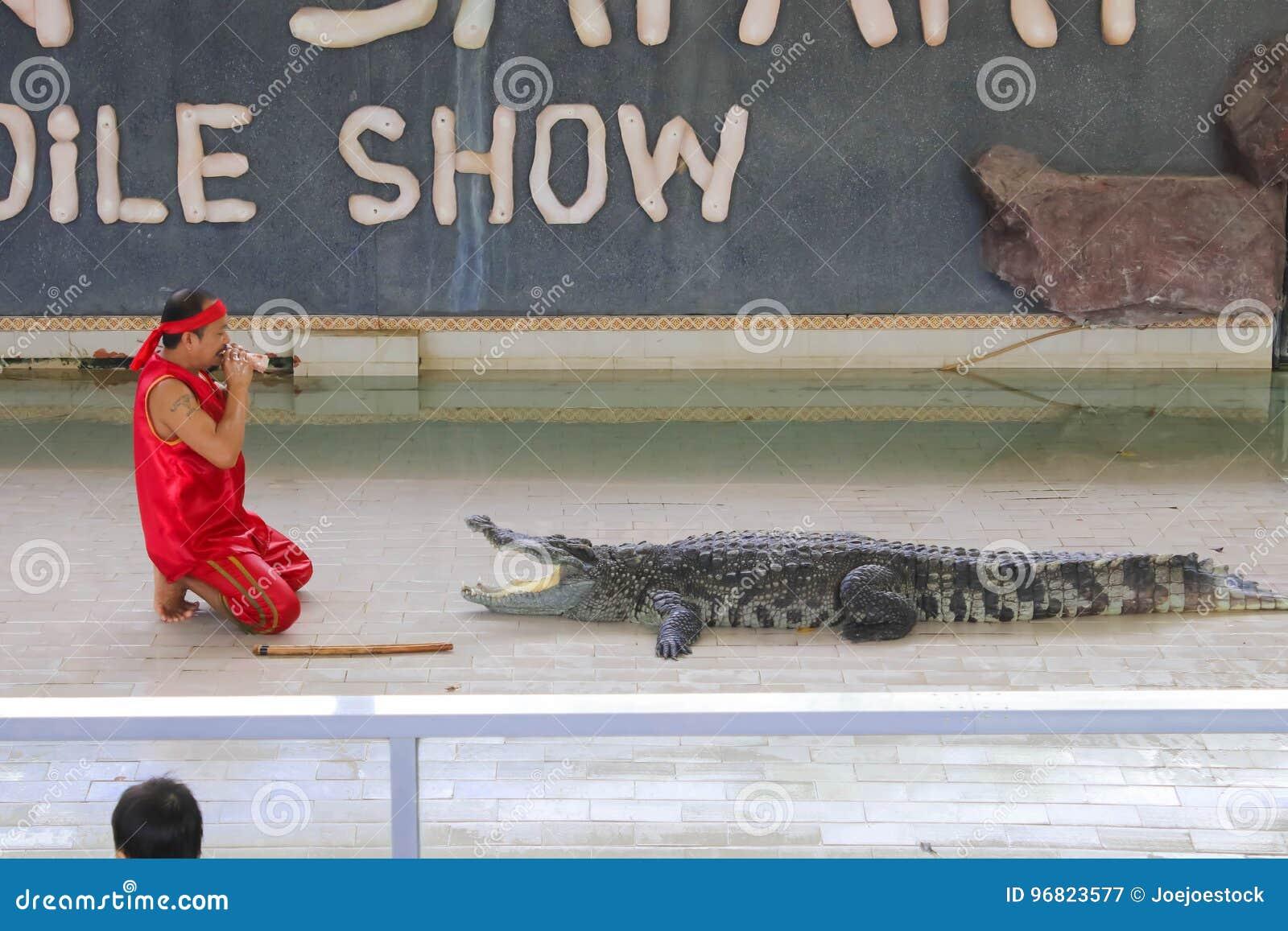 Editorial-4th przedstawienia duży krokodyl na podłoga w zoo