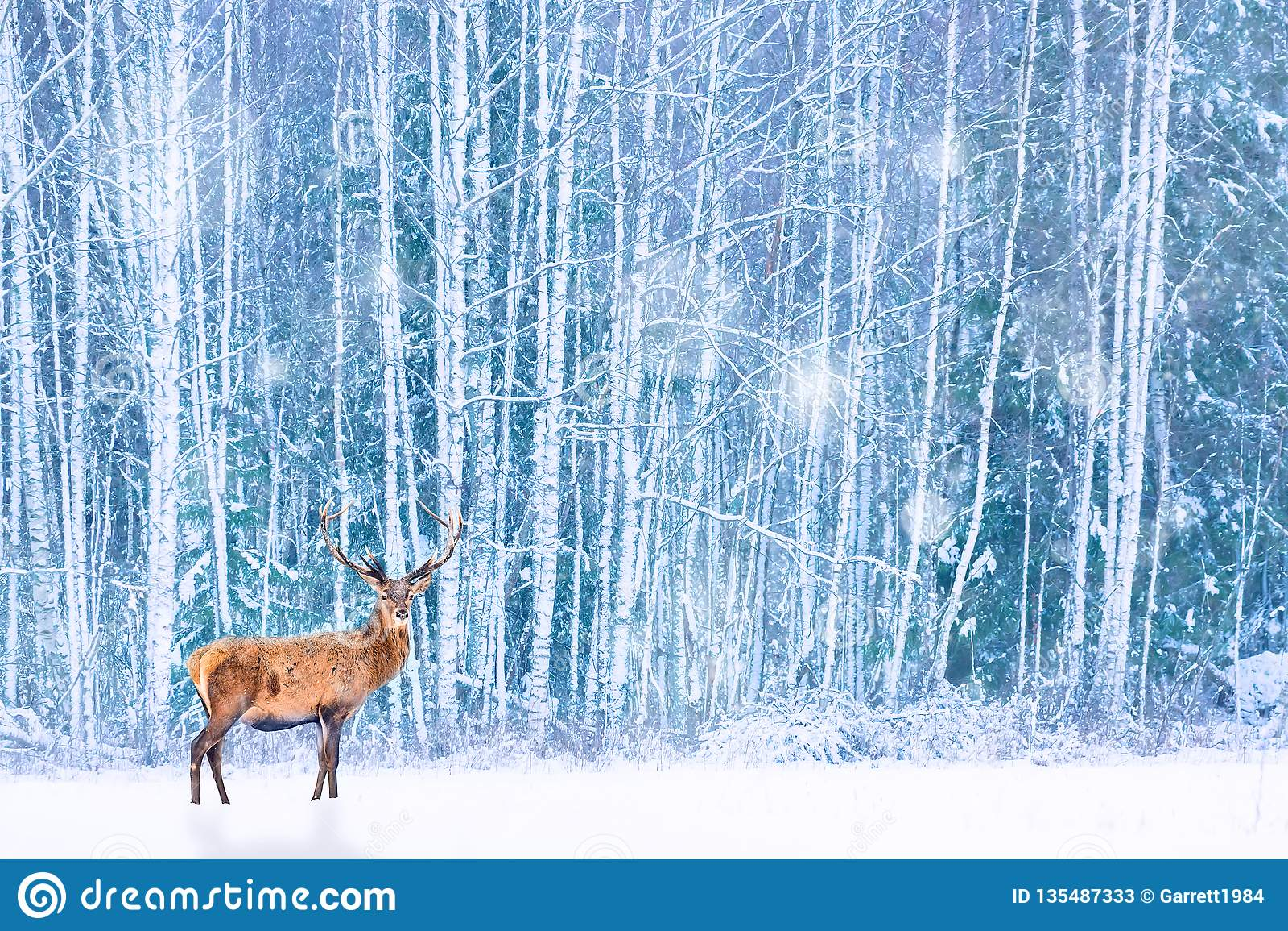 Edle Rotwild gegen künstlerisches feenhaftes Weihnachten schneebedeckter Wald des Winters Wintersaisonbild