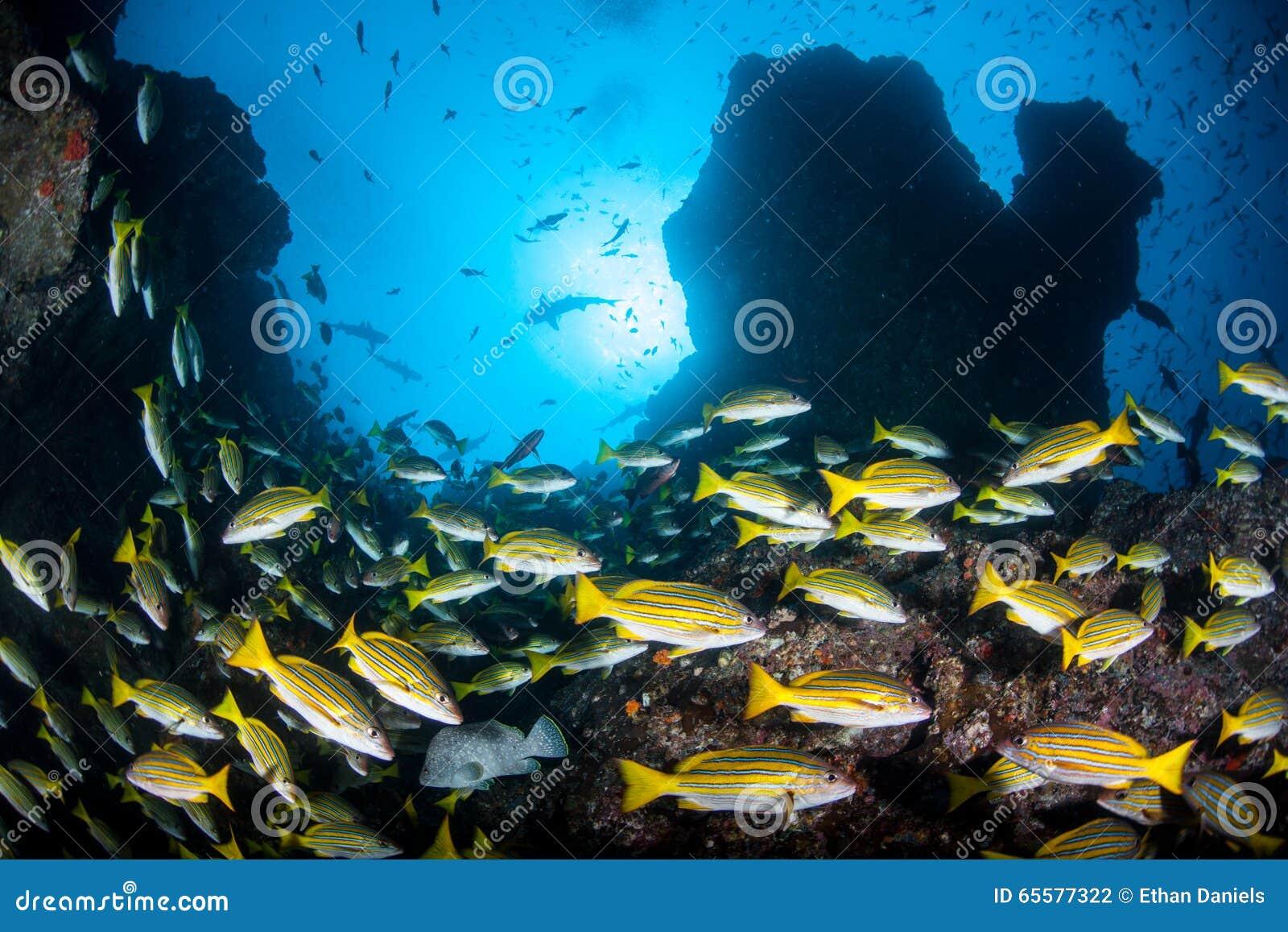 Educando a caranga e o Rocky Reef