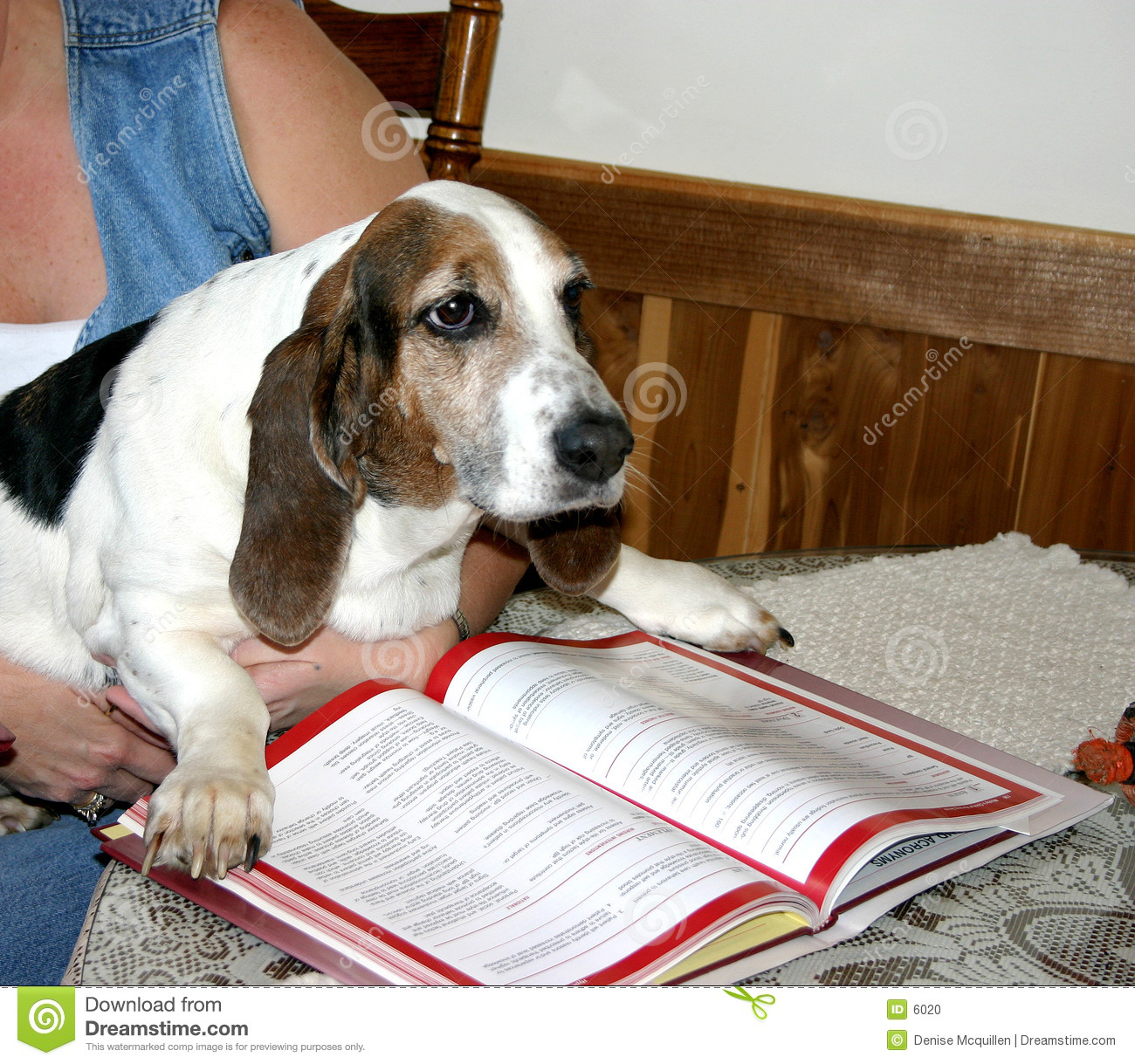 Educated dog